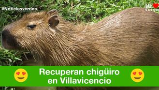 Chigüiro es recuperado en barrio de Villavicencio