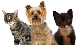 Aprueban incrementar multas para casos de maltrato animal.