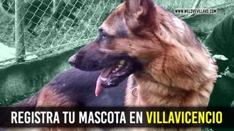Protege tu perro, son parte de tu familia.