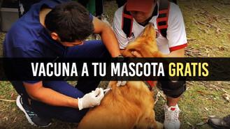 Vacunación gratuita para tu mascota