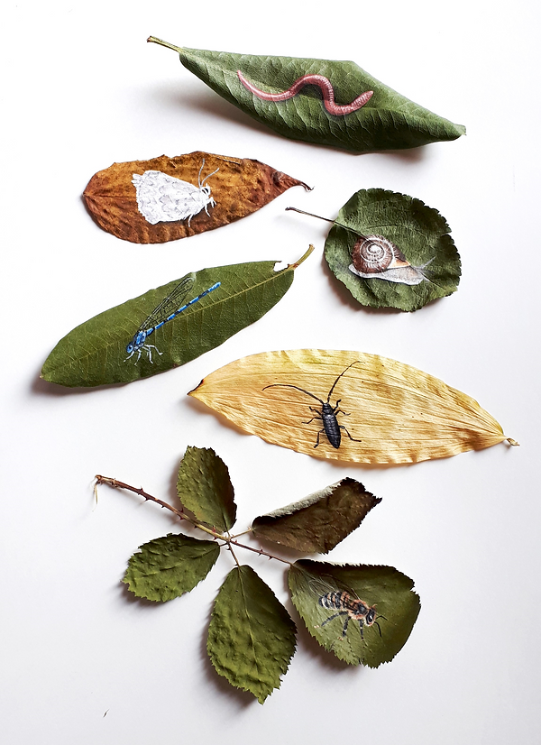Sheila Van Delft_Painted Leaves_2.tif