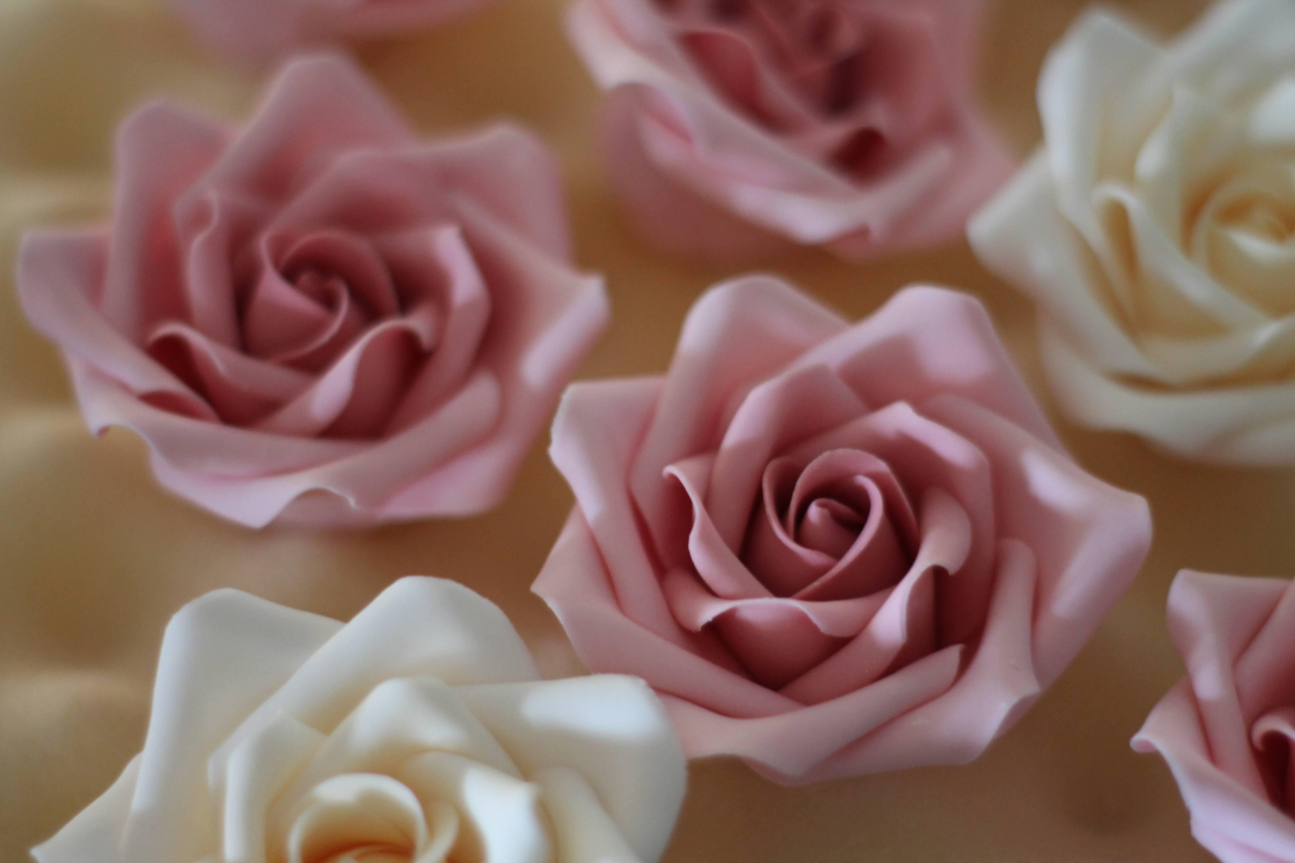 Beginners Roses