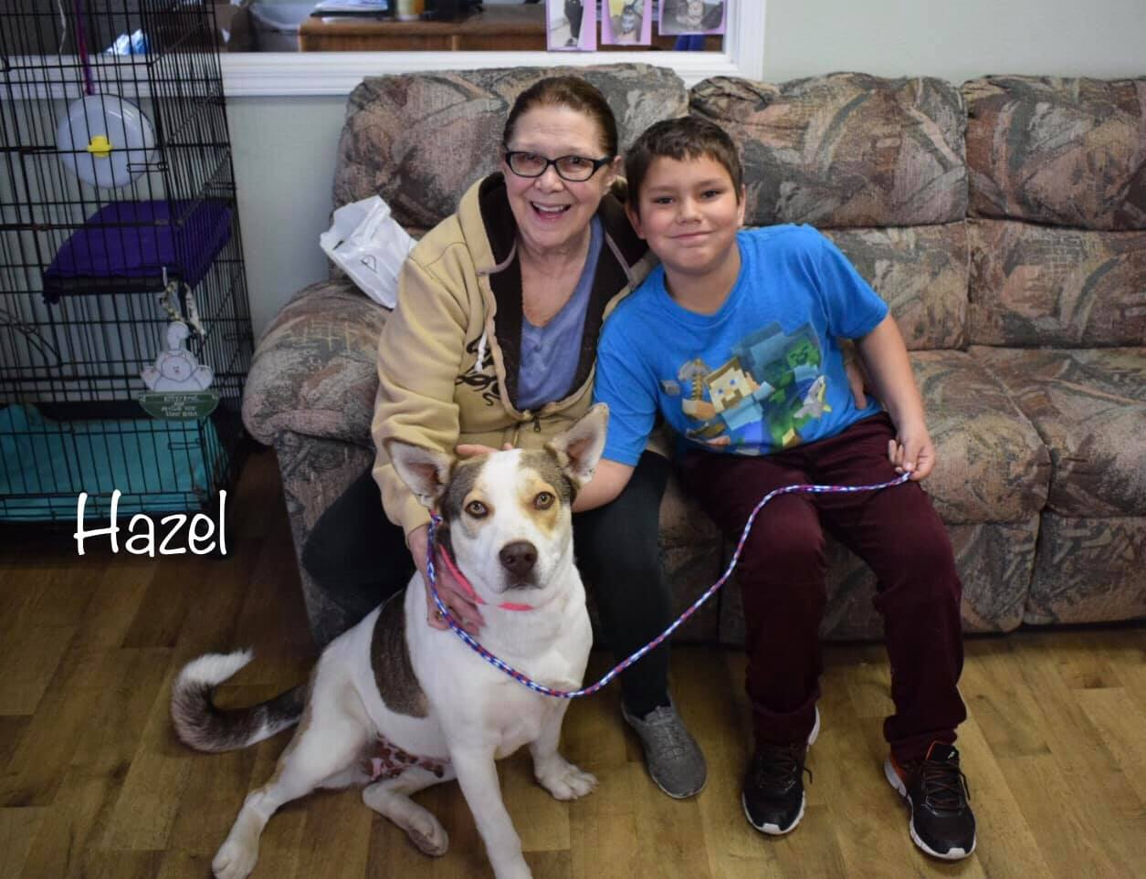 hazel adoption