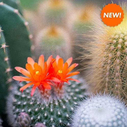 Jade and Cactus Flower