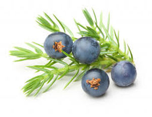 juniper berry the soy farm.jpg