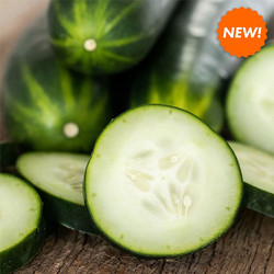 Fresh-Picked-Cucumber-Fragrance-Candle-T