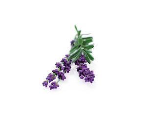 refill_0024_lavender the soy farm.jpg