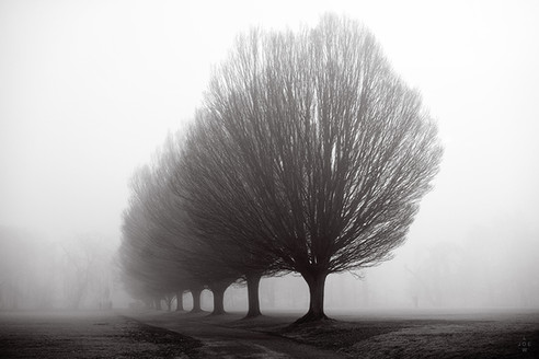 Hornbeam Trees in Fog, Winchester