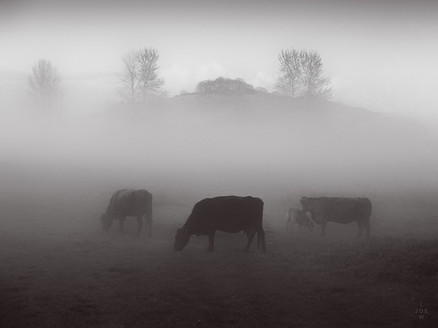 St Catherine's Hill - Fog