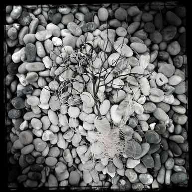 Chesil Beach #8