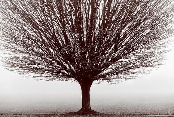 Hornbeam Tree, Winchester