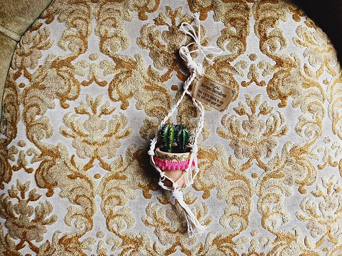 Hanging Succulent - Potted