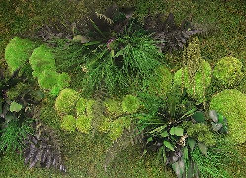 אזור וקירות ירוקים