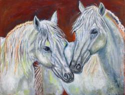 2סוסים-לבנים