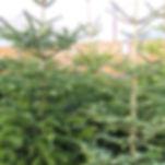 xmas tree 3.jpg