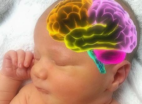El Cerebro del Bebé y la Lactancia Materna