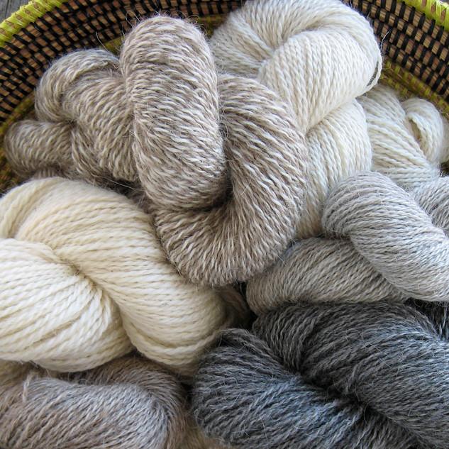 Fiber & Yarn