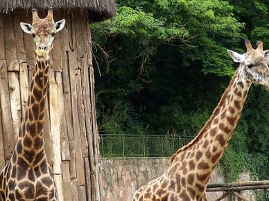 #2 | M., ou uma História sobre Girafas