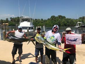 1 Blue Marlin 2 of 2 Sailfish Released & 2 Dorados 45 Lbs 1  de 15 Lbs