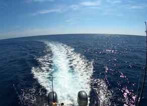 Live Action Guatemala / #Blue Marlin