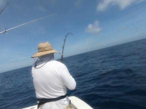 400 lbs Blue Marlin / Cañaso
