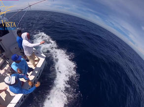 You will never see these beautiful colors in a Blue Marlin again.