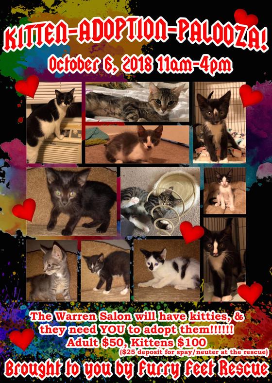 Kitten-Adoption-Palooza at The Warren on October 6