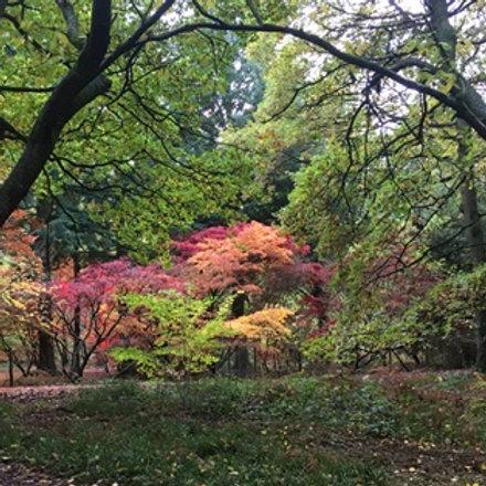 Secret Garden Meditation FREE