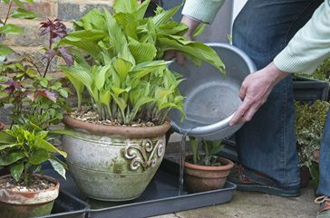 Fig 3. Using greywater collected with a bucket to water pot plants.