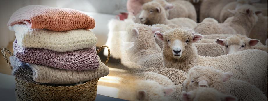 wool website.png