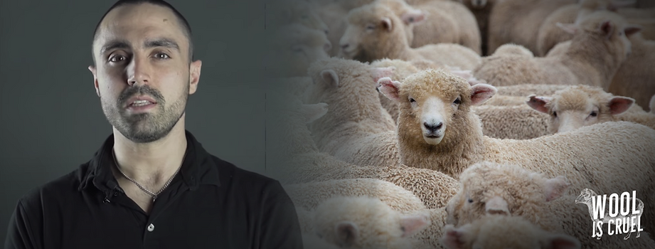 wool IS CRUEL-2.png