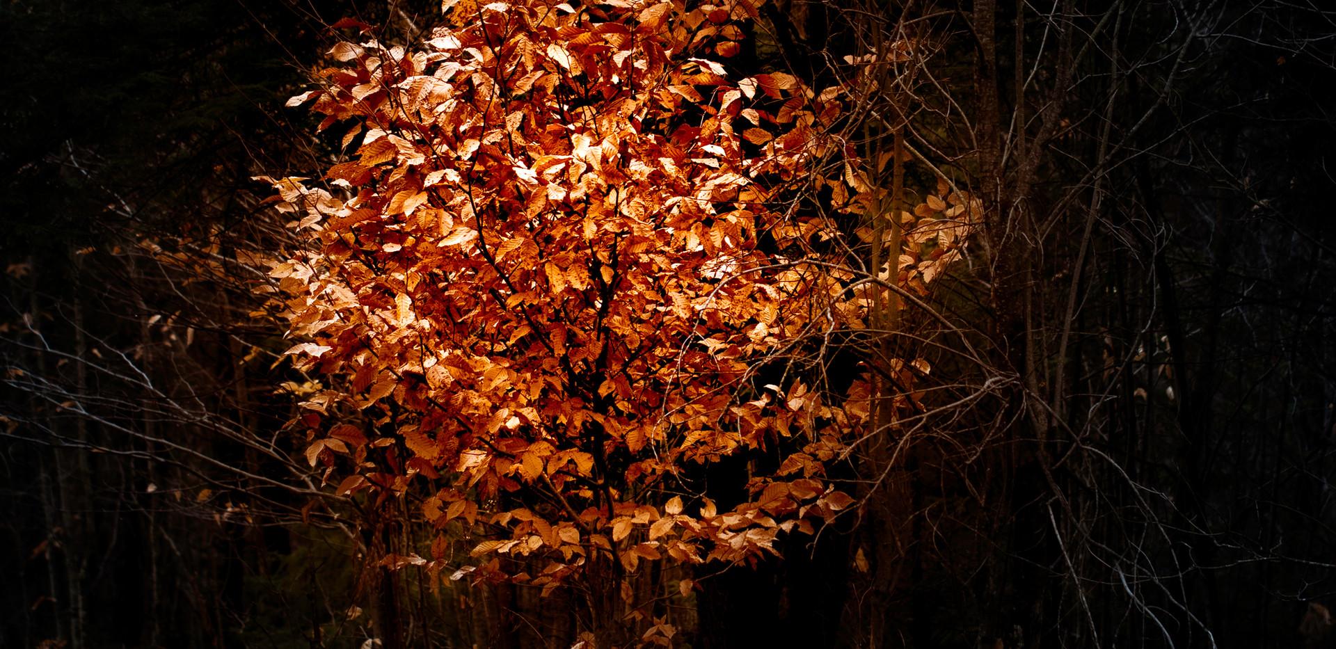 big glow tree.jpg