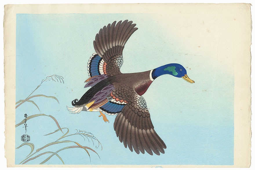 #3072 Duck