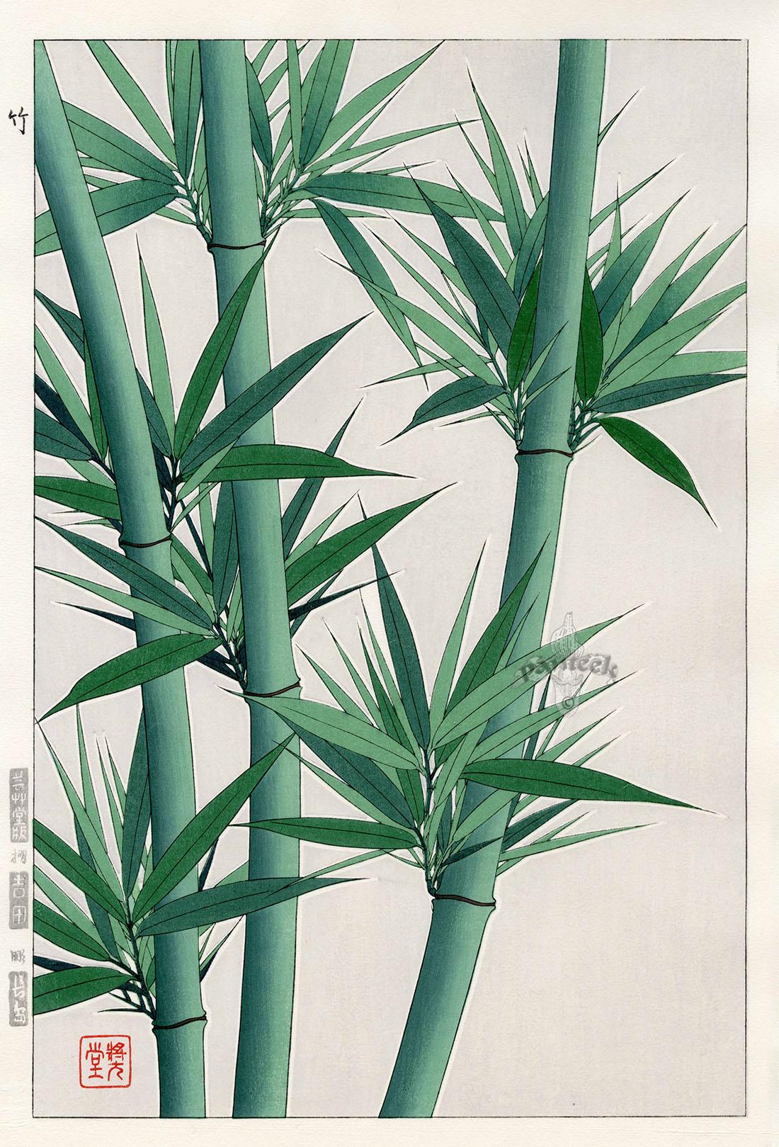 #4019 Bamboo