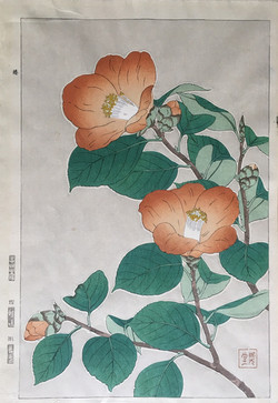 #3061 Tsubaki flowers