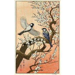 #3015 Flying Around the Plum Tree