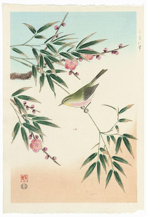 #3070 Bush Warbler
