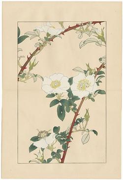 #4017 White Flowers
