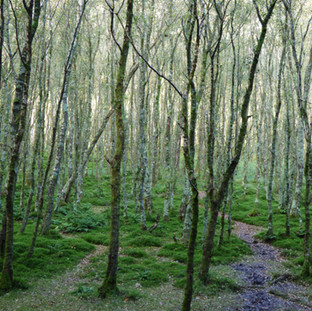 Jennifer Hart Forest Walk