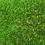 Thumbnail: Natura