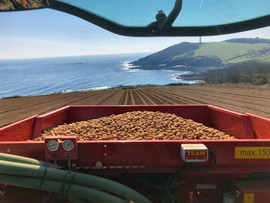 Planting Colwith Farm Potatoes
