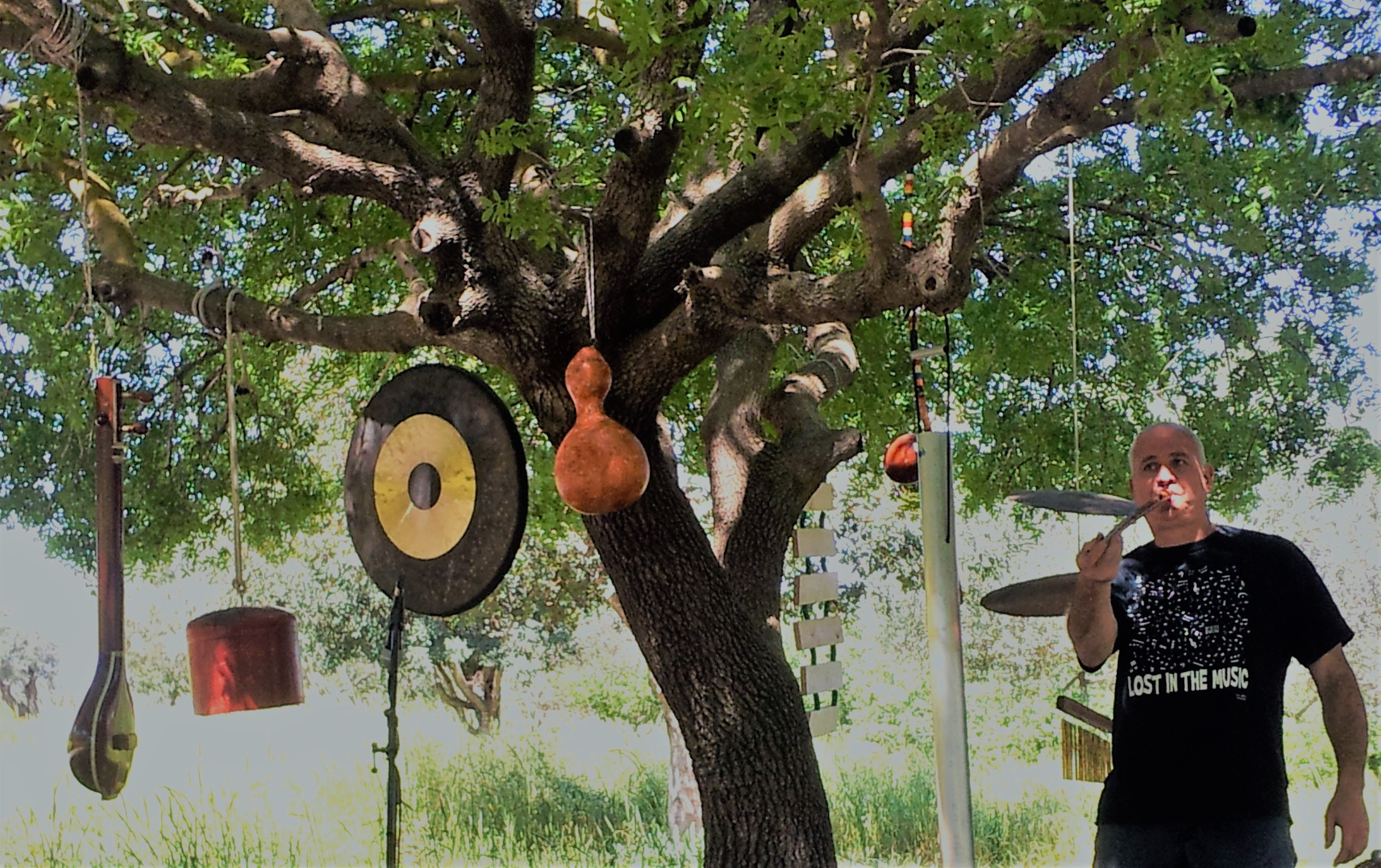 sound from the tree