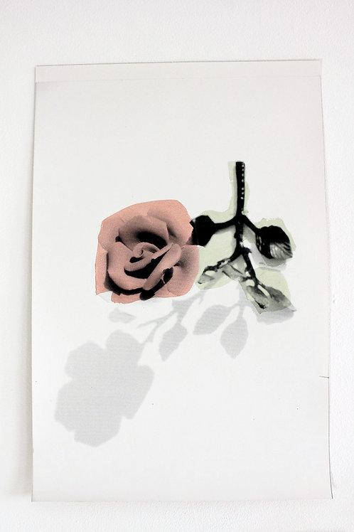 Paper Roses - Print