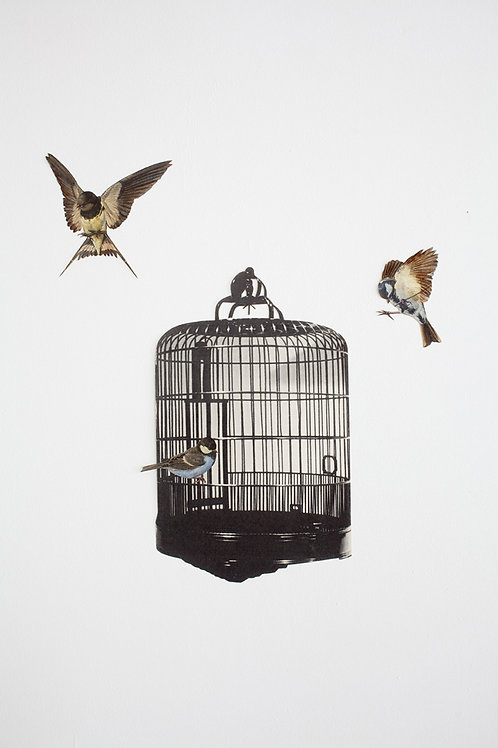 Cagey Birds - Wallpaper Cut-Outs