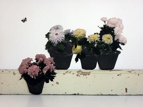 Paper Pot Plants - Wallpaper Cut-Out