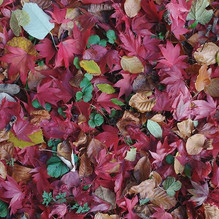 Treading softly amongst all this leafy b