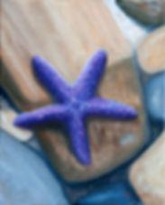 purpleseastar.jpg