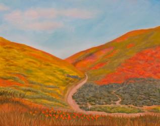 Walker Canyon Super Bloom