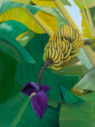 The Banana Tree in Kona