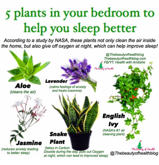 5 Plants In The Bedroom To Help You Sleep Better